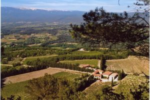 """Happy with what we've got"" - an overview of the Domaine des Anges in the Vaucluse"