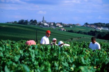 Discovering the Magic of Muscadet